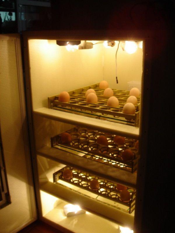 Саморобний інкубатор з холодильника