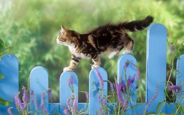 Секрет котячого рівноваги
