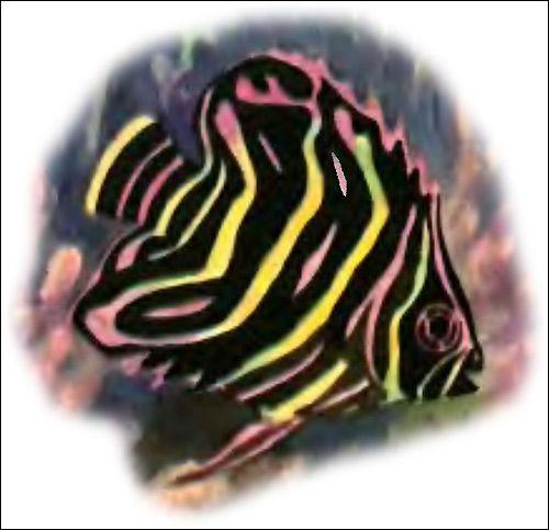 Сімейство щетинозуби, або риби-метелики (chaetodontidae)