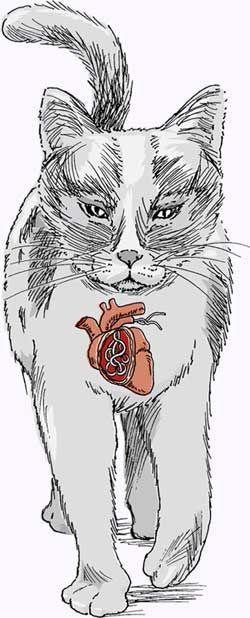 Серцеві черви у кішок.