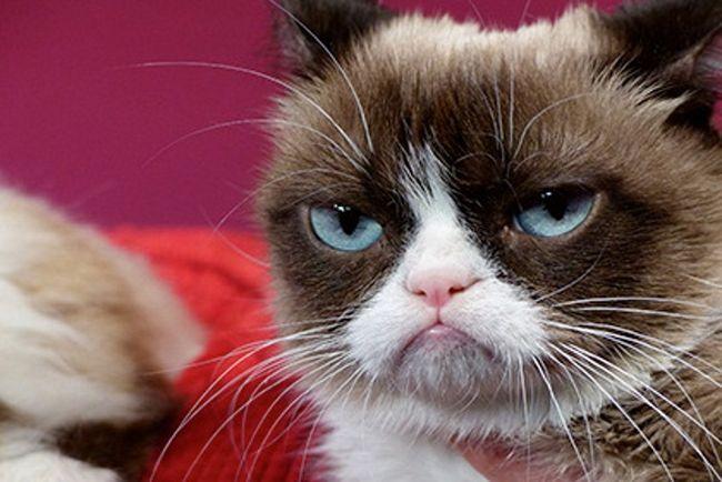 Сердитий кіт зустрівся з фанами.
