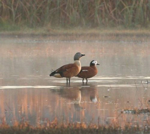 Самець і самка стоять у воді