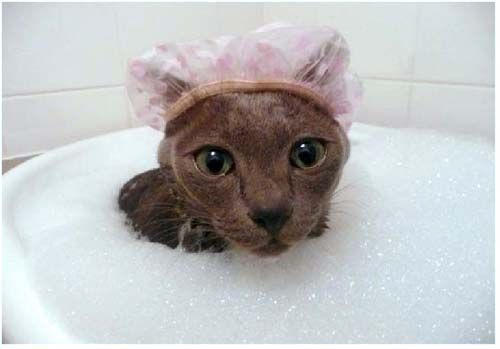 купання кішки