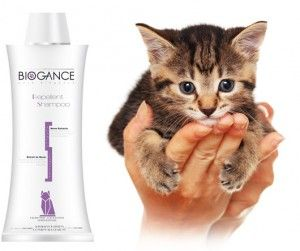 Шампунь для кішок