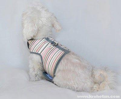 Шлейка своїми руками для собаки: покрокова інструкція