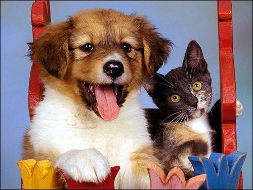Шутцхунд: початок навчання собаки