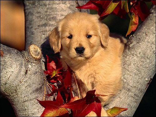 Шутсхунд: проблеми позиціонування і поведінки собаки
