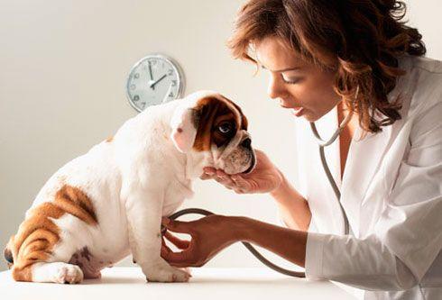 допомога собаці при отруєнні