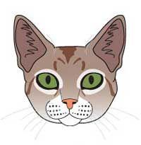 Сінгапурська порода кішок. Стандарт породи і критерії оцінки.