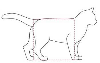 Кішка Сінгапурської породи. тіло
