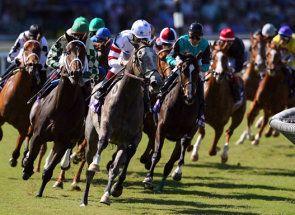 Скачки - випробування для коня або нервів вершника?