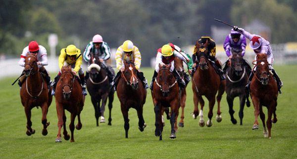 Кілька коней мчать по трасі