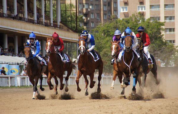 Кілька коней беруть участь в перегонах