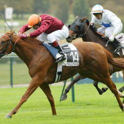Коні і жокеї на поле