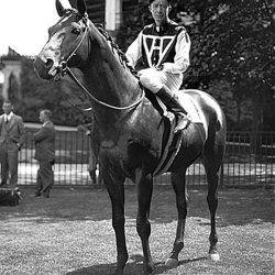 Сухар - один з найвідоміших представників скакових коней
