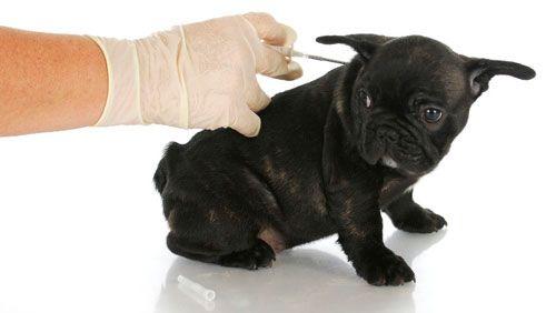 лікування собаки інсуліном