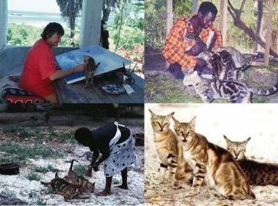 Сококе гостья из далекой Африки