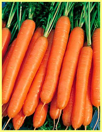 Сорти моркви з фото і описом