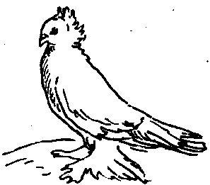 Соттобанка (голуби)