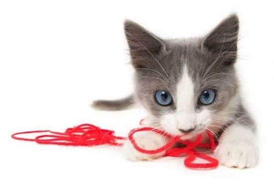 Поради щодо вибору кошеняти