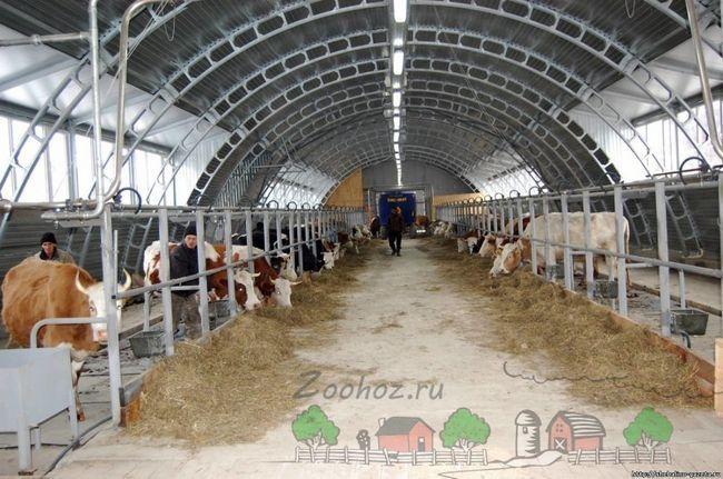 Приклад міні молочної ферми