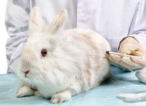Рятуємо життя кроликам - правила вакцинації c докладною інструкцією