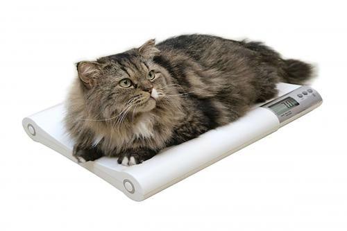 Середня вага кішки