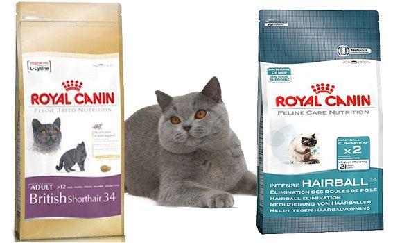 Корм для британських кішок