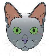 Стандарт породи кішок корат.