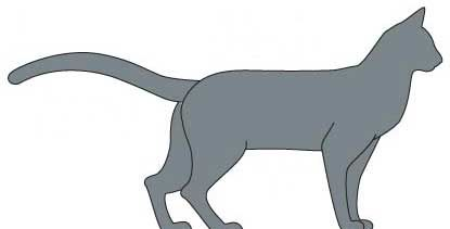 Російська Блакитна кішка. тіло