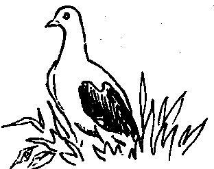 Старорусские кружастие (голуби)