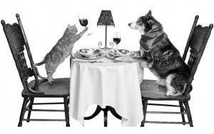Їдальня для кішки