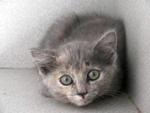 налякана кішка