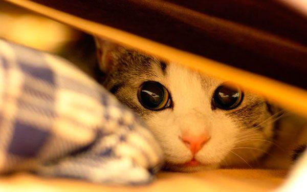Стреси у котів: причини, ознаки та методи боротьби