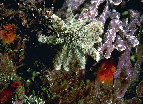 Життя на кораловому рифі
