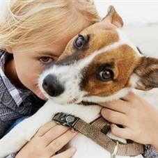 Судоми у собаки: причини, види. Що робити при судомах