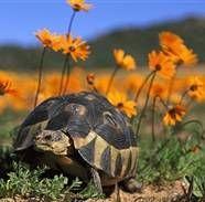 Сухопутні черепахи: зміст, годування, догляд