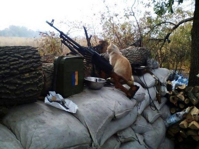 Суворі коти Донбасу і Горлівки несуть дозор.