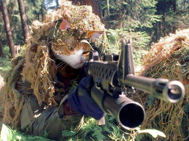 Хороший камуфляж робить такого суворого кота практично непомітним.