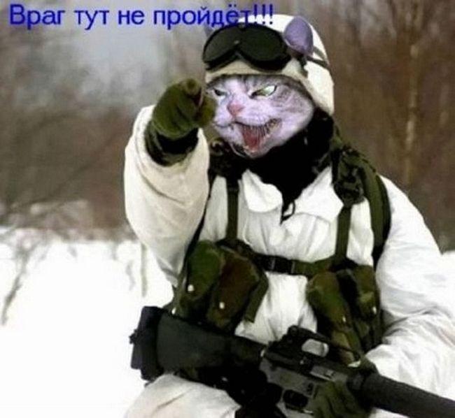 Суворі коти Донбасу і Горлівки на посаді.