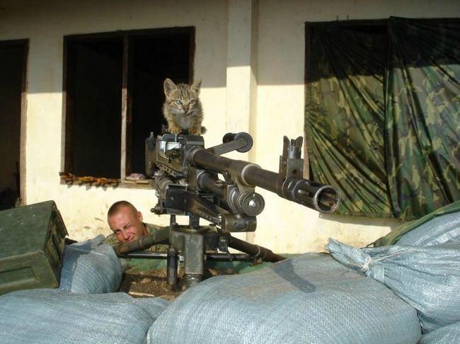 Суворі кошенята Донбасу освоюють приціл.