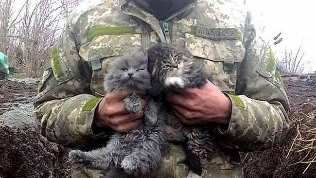 У суворих умовах війни навіть такі милі кошенята виростають в суворих котів.