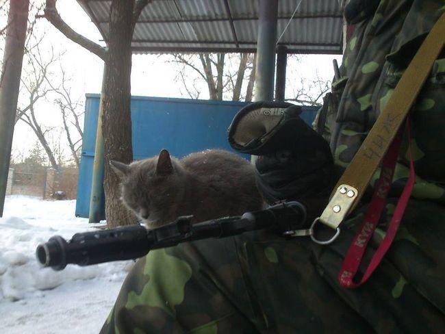 Коли поруч є товариш, суворому коту Донбасу можна і подрімати.