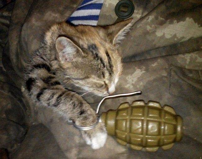 Цей суворий кіт Донбасу завжди напоготові. Навіть уві сні.