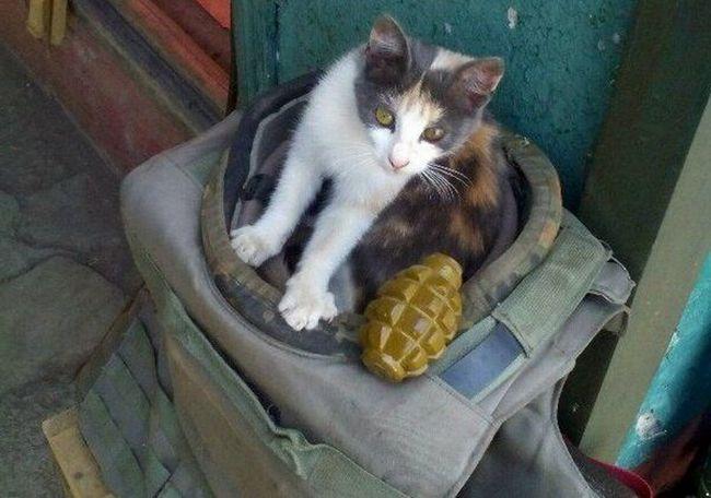 Гранати анітрохи не лякають суворих котів Донбасу.