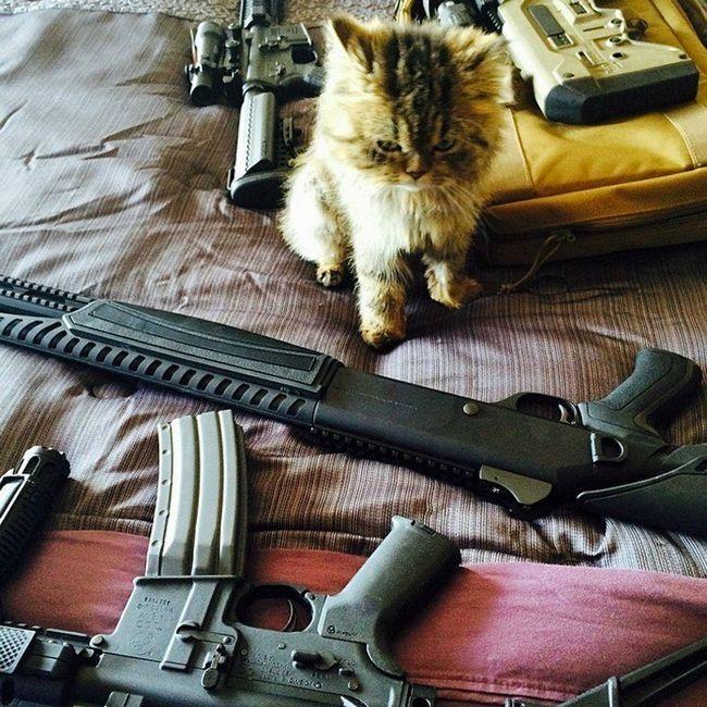Суворий кіт-екзот Донбасу і Горлівки навіть не знає з чого йому вибрати.