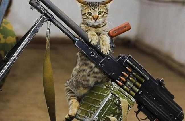 Серед суворих котів Донбасу є і кулеметники.