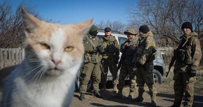 Суворі коти люблять позувати на фоні своїх бойових товаришів.