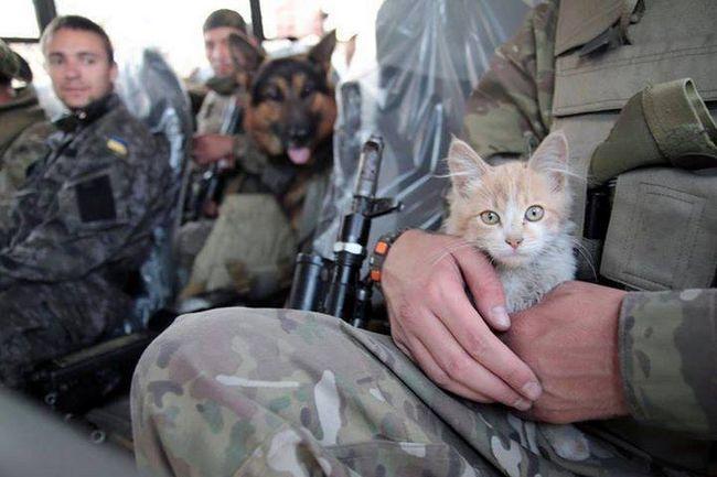 Суворі коти та суворі собаки - ось вірні супутники бійців.