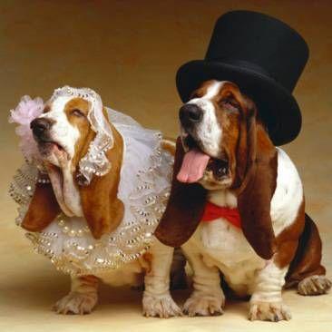 Весілля для домашніх тварин